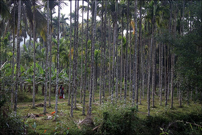 Frau im Palmenwald