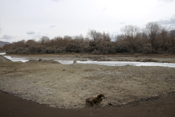 Winterladakh: Hund in Choglamsar