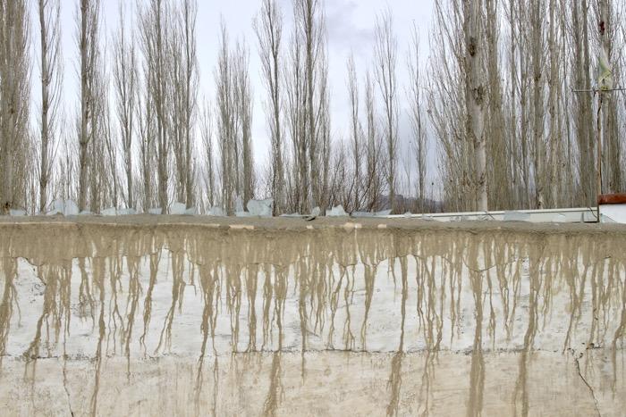 Winterladakh: Mauer und Bäume in Choglamsar