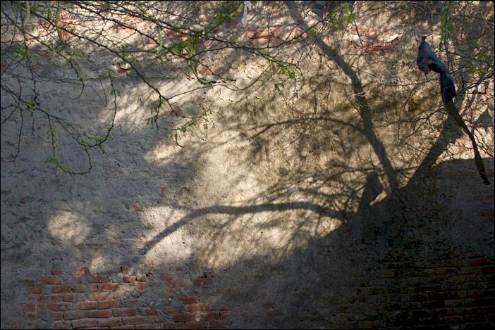 Baummauerschatten in Dwarka