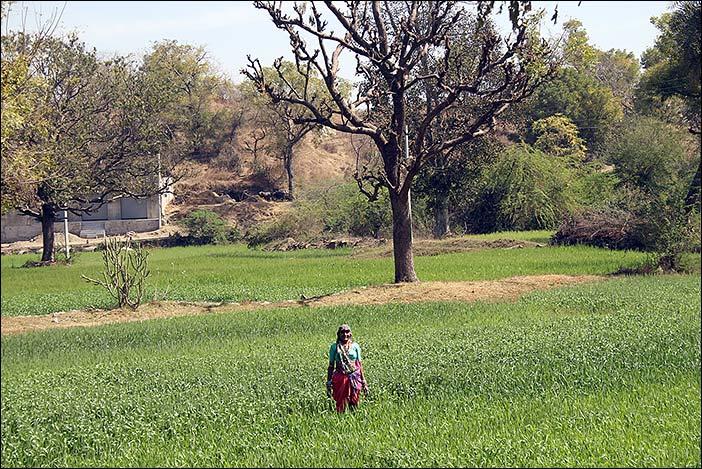 Feldfrau in Südrajasthan