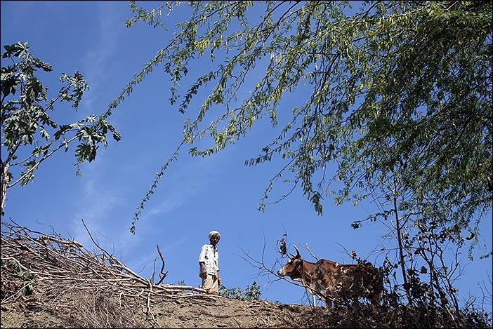 Mann mit Kuh in Südrajasthan