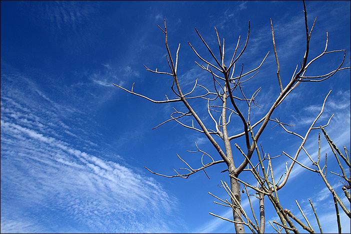 Zweige in Samal