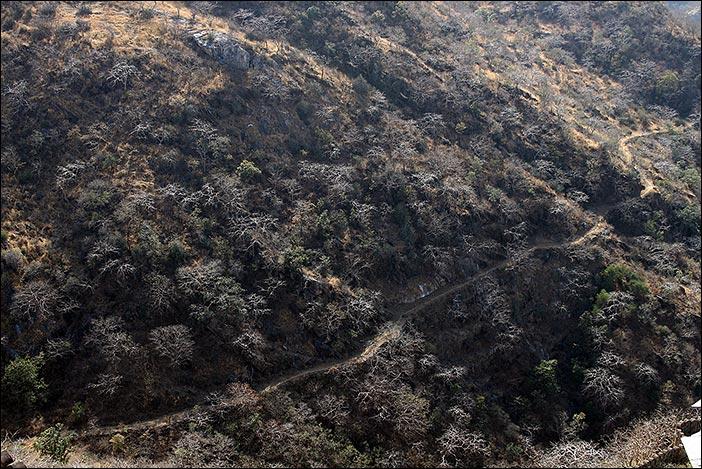 Pfad im Kumbalgarh Naturpark