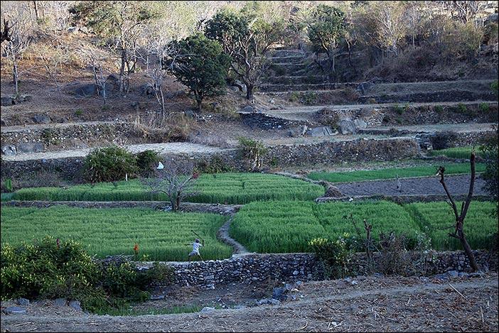 Felder bei Dorfspaziergang