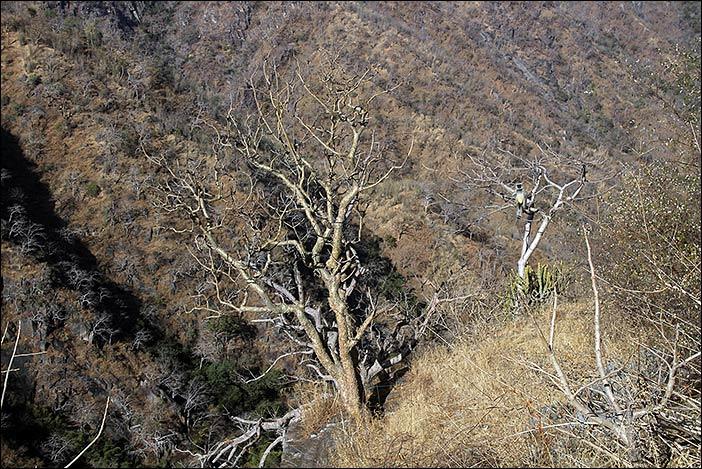 Baum im Kumbalgarh Naturpark
