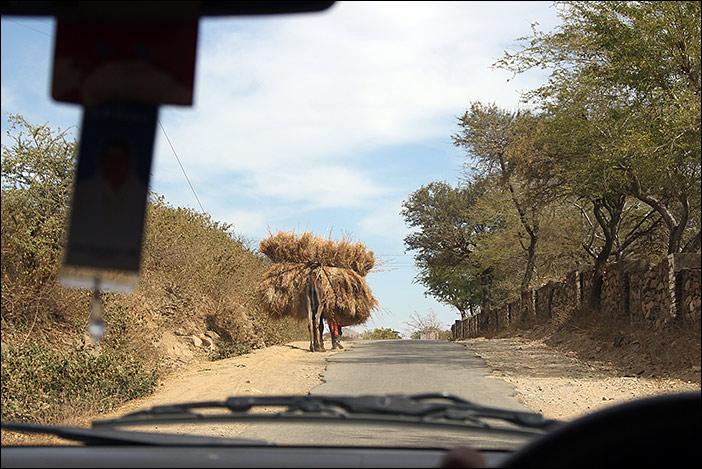 Kamelladung in Süd-Rajasthan