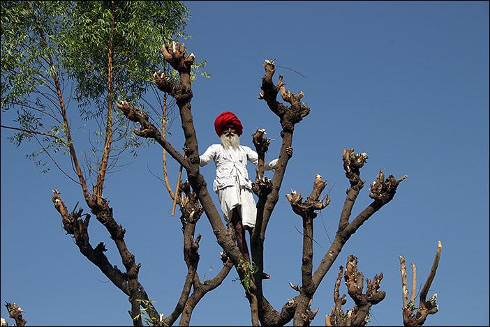 Raika Mann auf Baum
