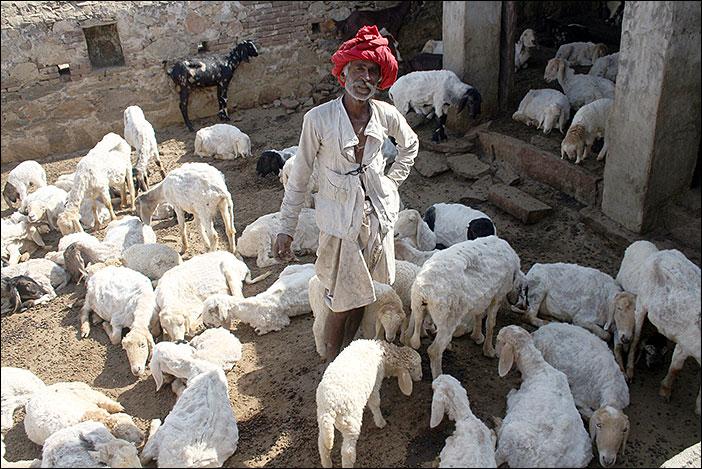 Raika mit seinen Tieren
