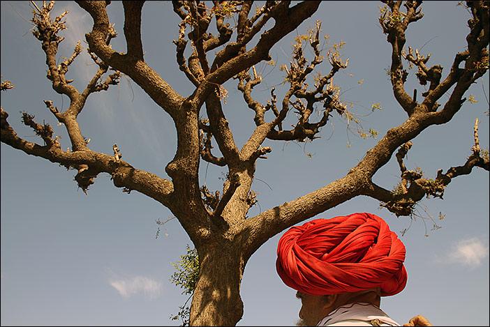 Turban und Baum