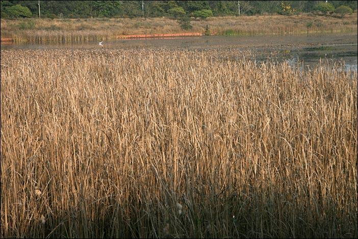 Teich in Lumbini