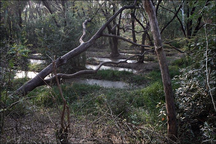 Natur im Park von Lumbini